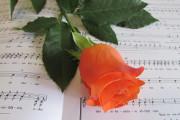 Rose orange auf Noten